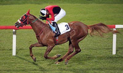 at yarışı bahisleri